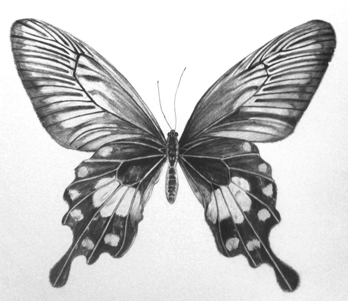 Рисунки с бабочками карандашом