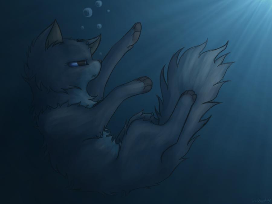 Коты воители картинки синяя звезда, открытка днем