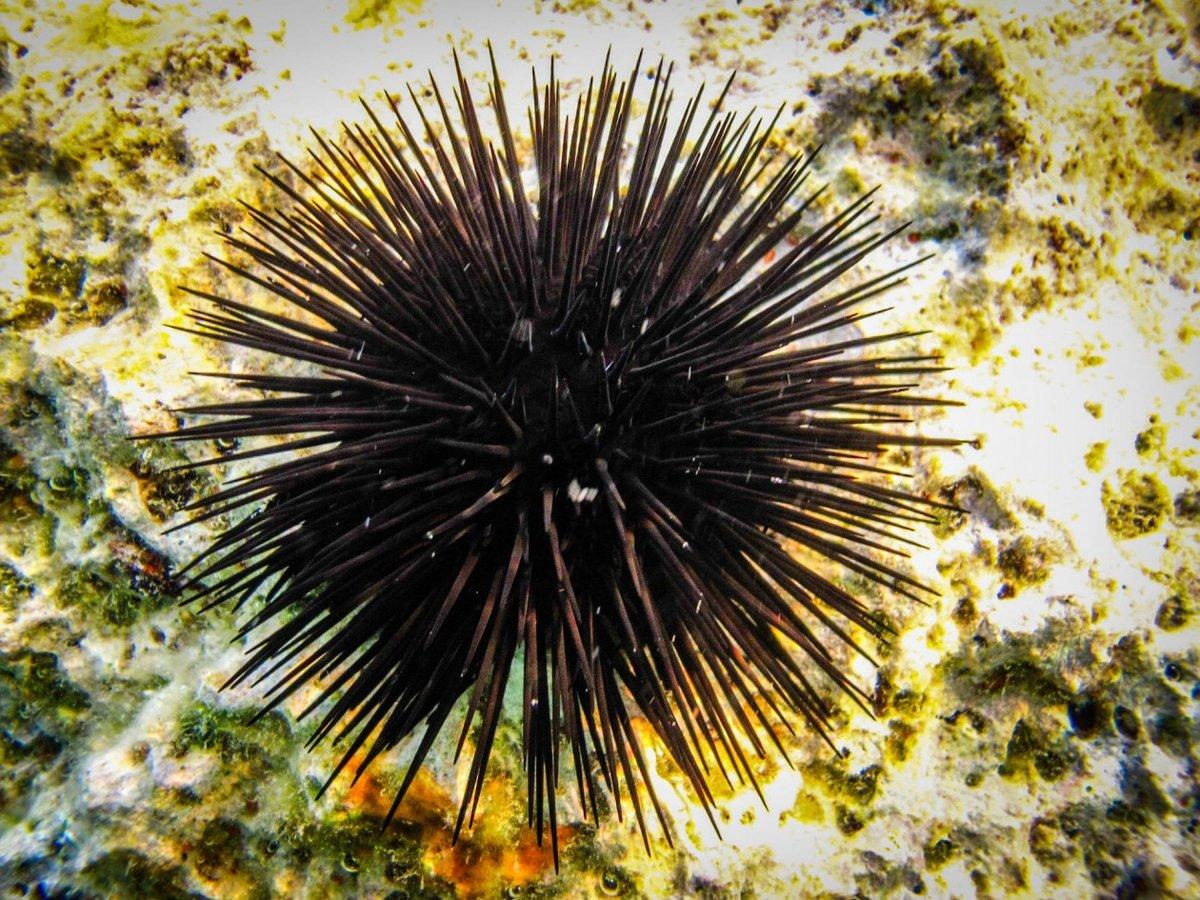 морские ежи картинки фотосессию можно провести