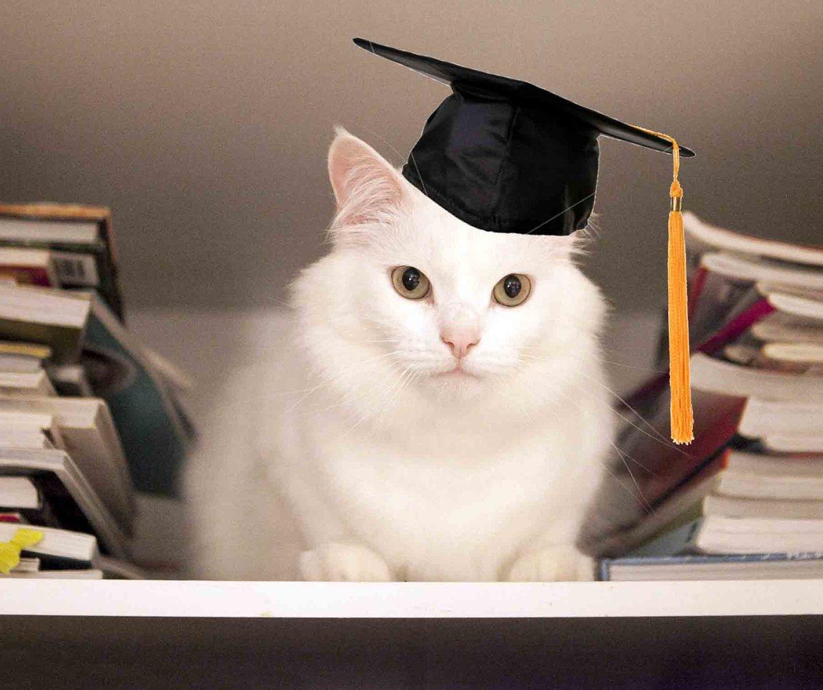 картинки умных кошек новым годом