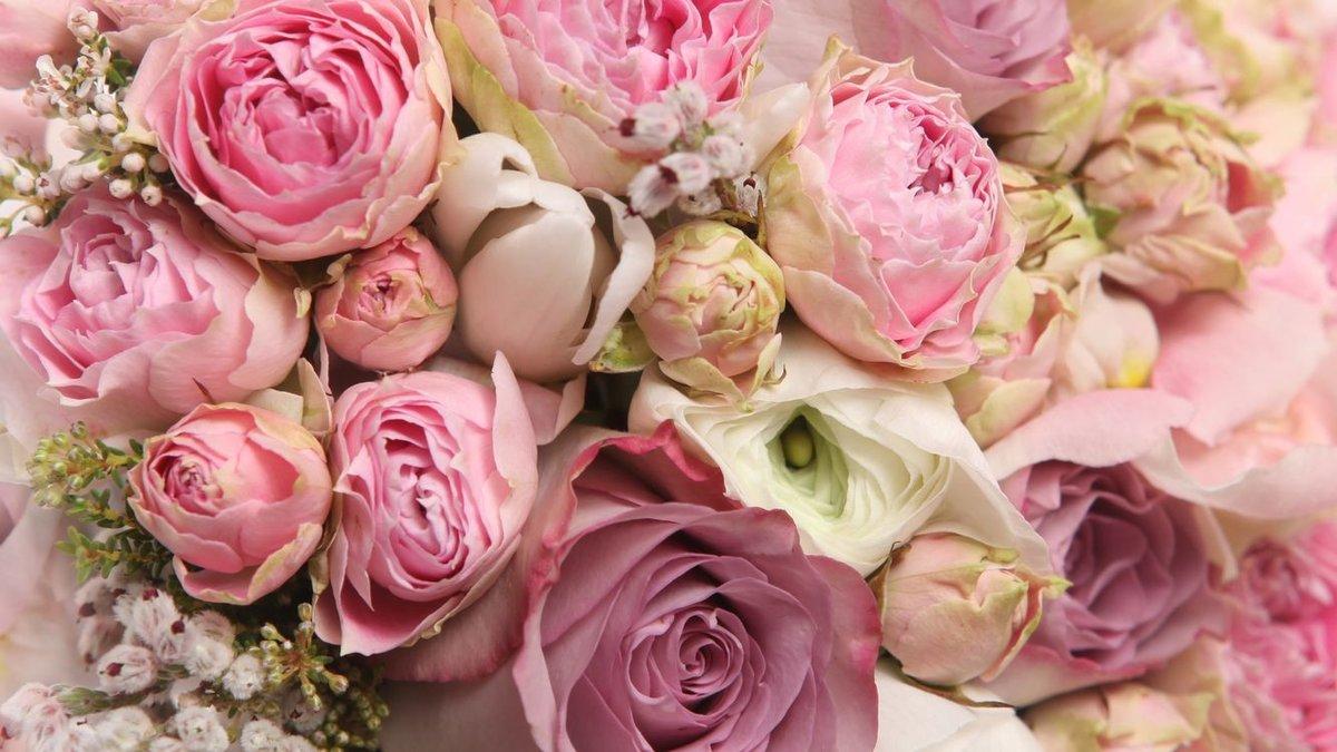 Картинки на рабочий стол цветы самые красивые
