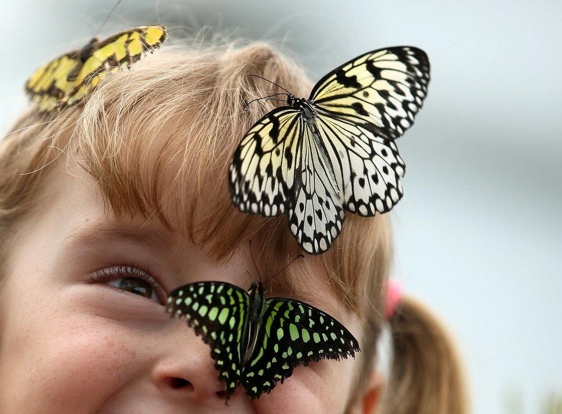 Поздравление, картинки с бабочками живыми
