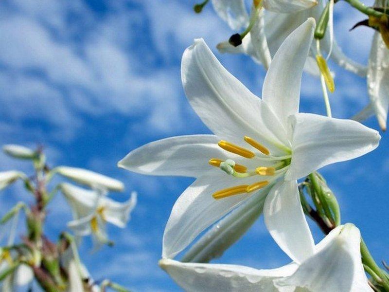 Картинки с добрым утром цветы лилии, учителя открытка черно