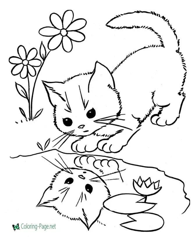 Кошка картинки раскраски