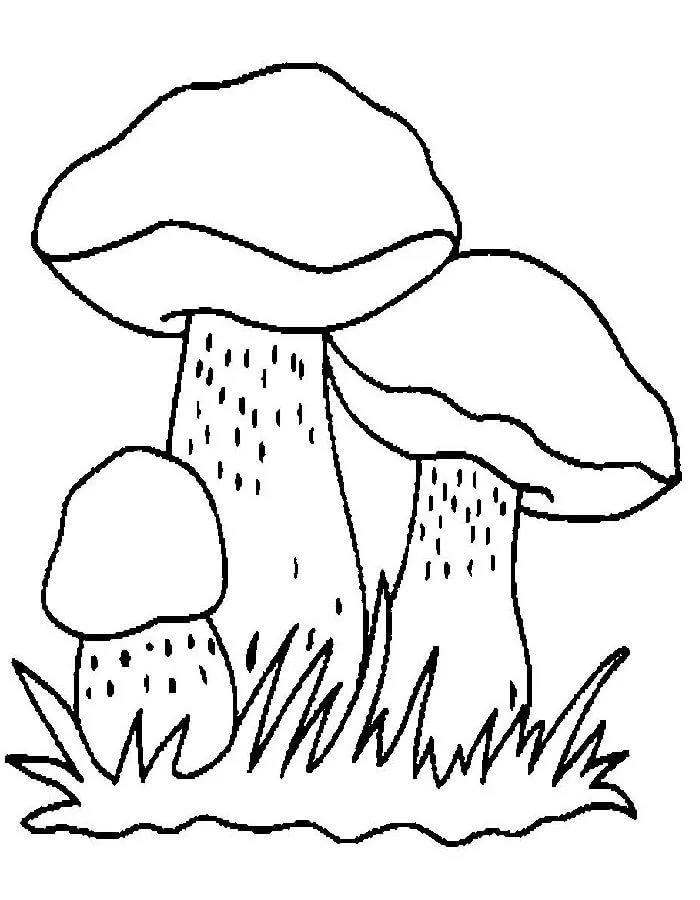 Картинки грибов для раскрашивания подосиновик