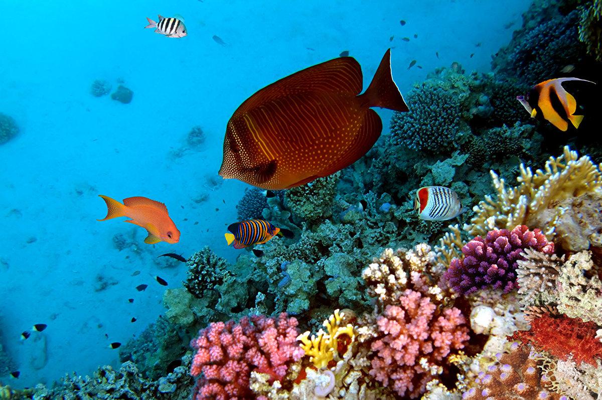 Картинки подводного мира, чашкой