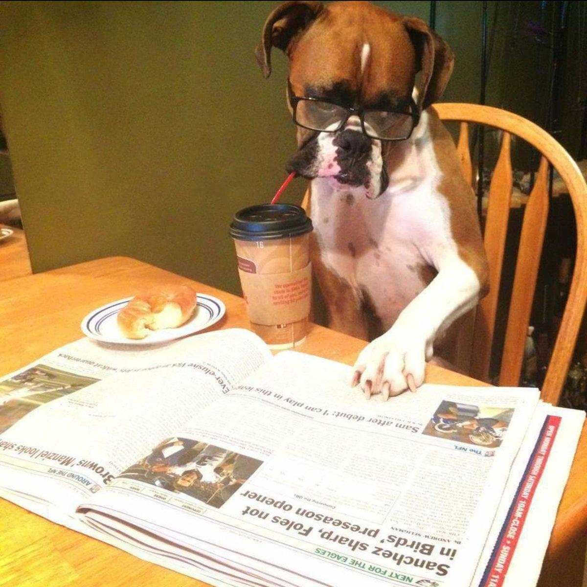 Картинка собака читает газету