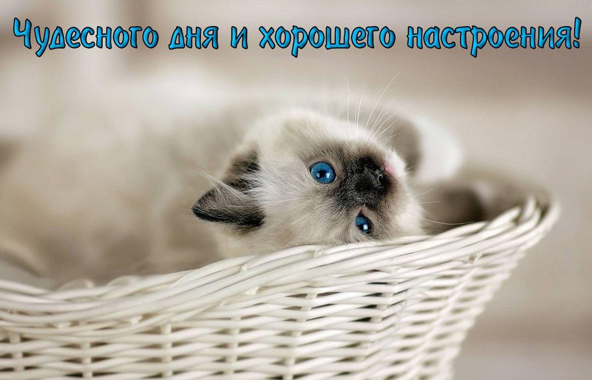 прикольные котята с пожеланиями хорошего дня сати