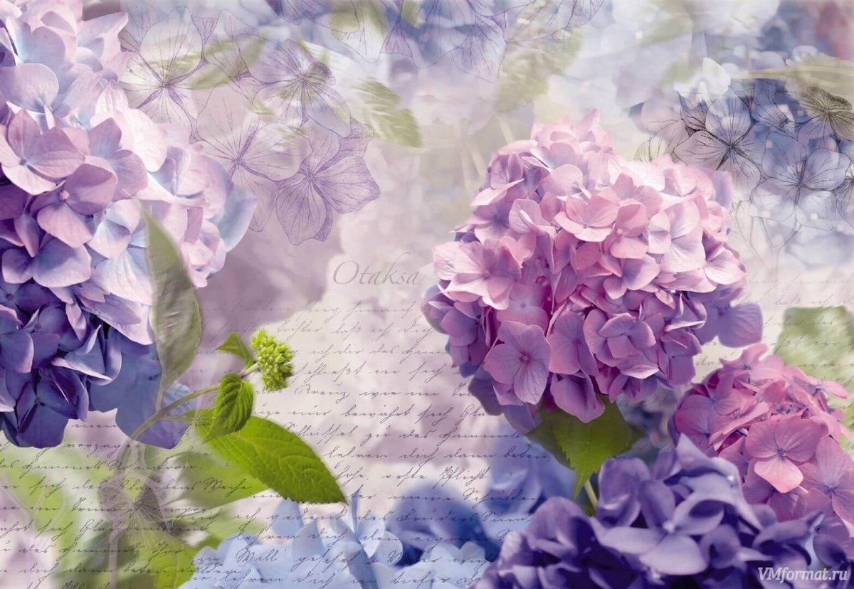 лепестки смогут цветы для постеров в хорошем качестве с большим разрешением праздник