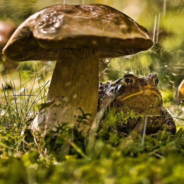 День грибного дождя картинки прикольные, открытка рождеством