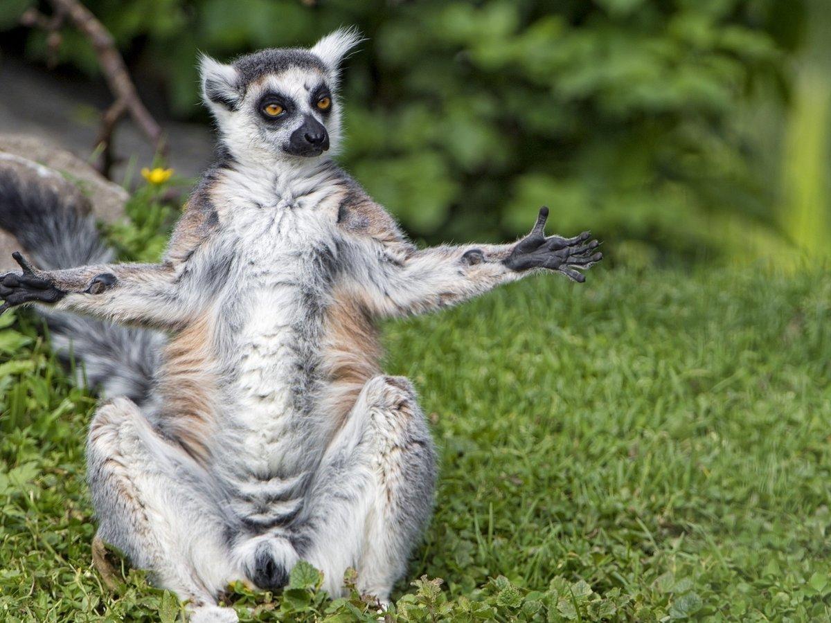 имеют посмотреть смешные картинки про животных детям