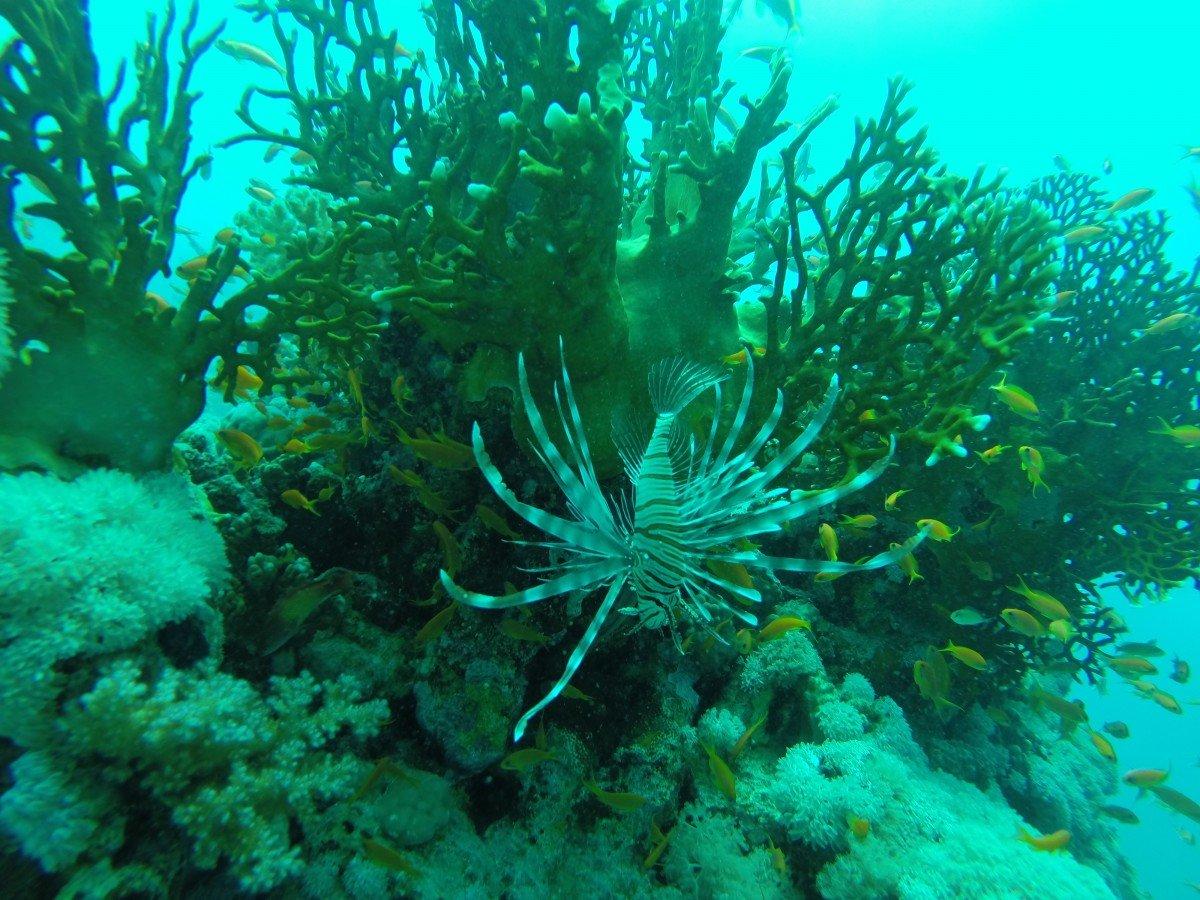 растения на черном море фото вентиляция, которая дает