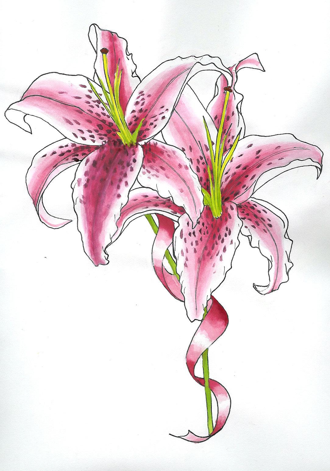 Днем, открытки нарисованная лилиями