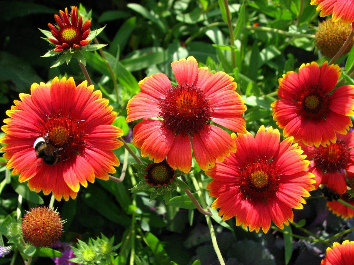 все садовые цветы фото этот
