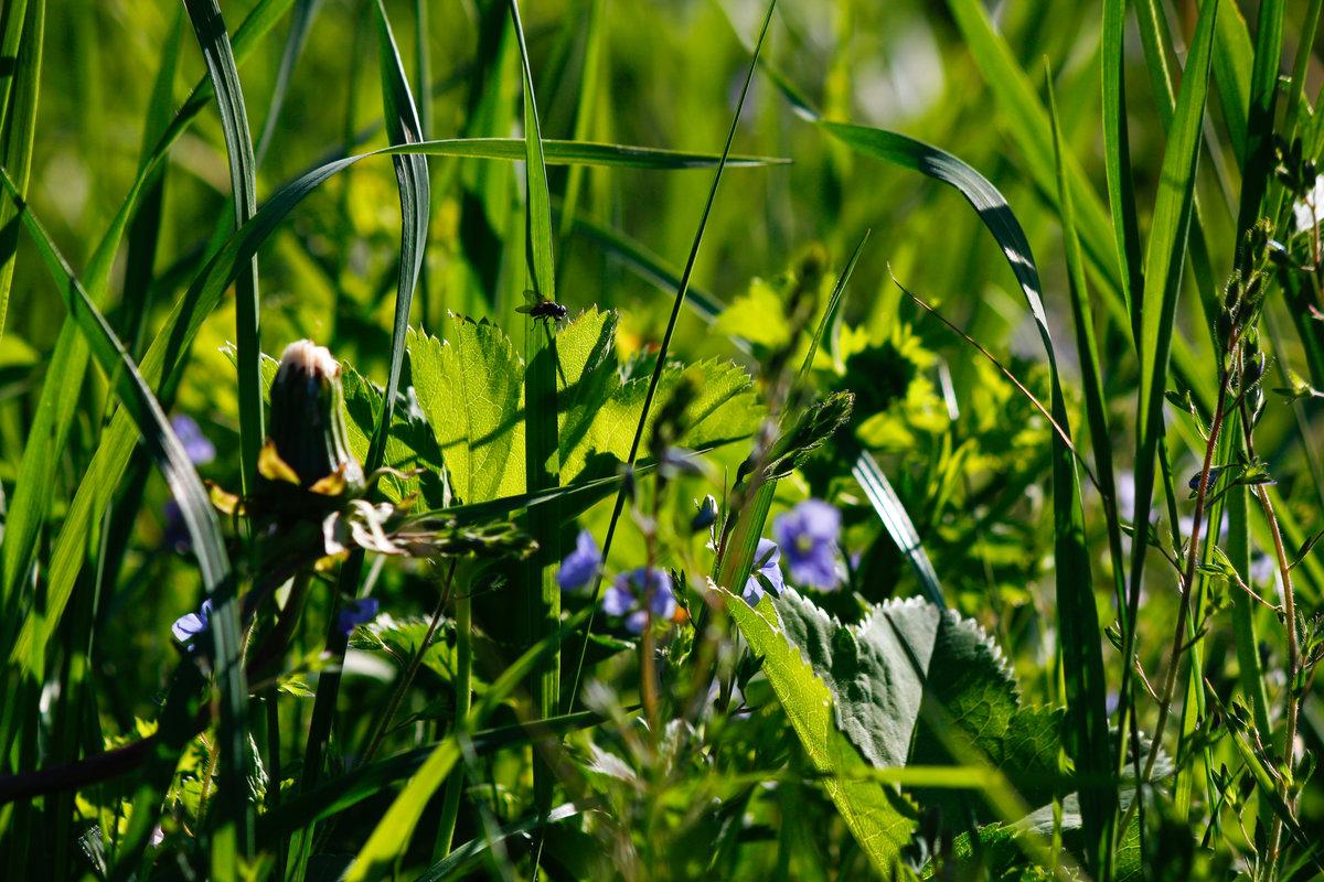Травушка муравушка картинки
