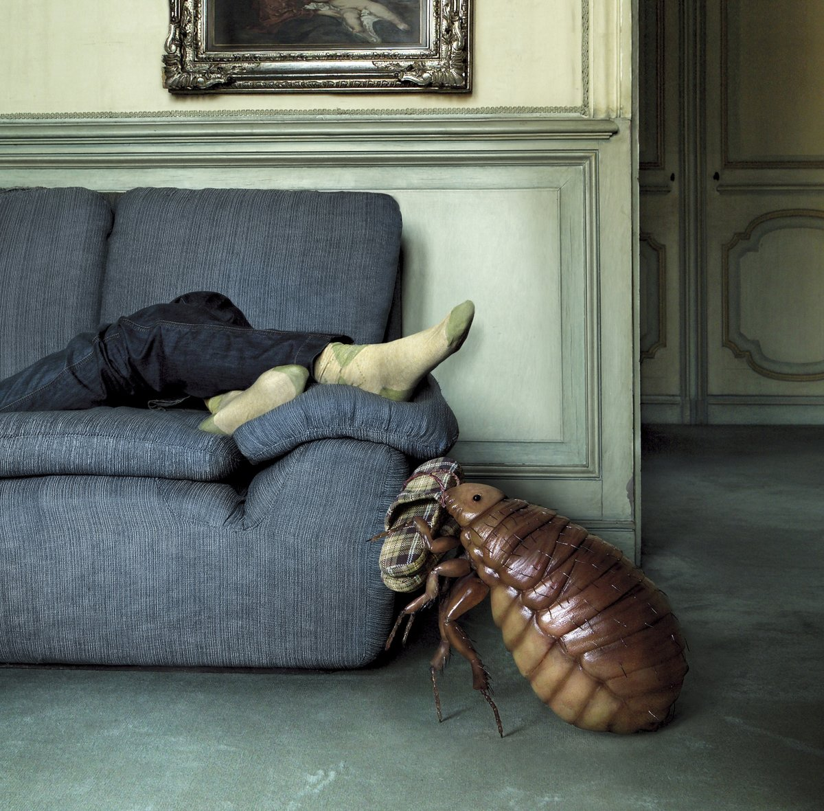 Мая, смешные картинки тапки от тараканов