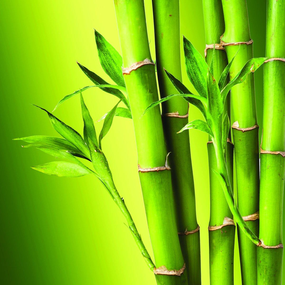 резонансный скандал картинка с бамбуком мамочка мечтает