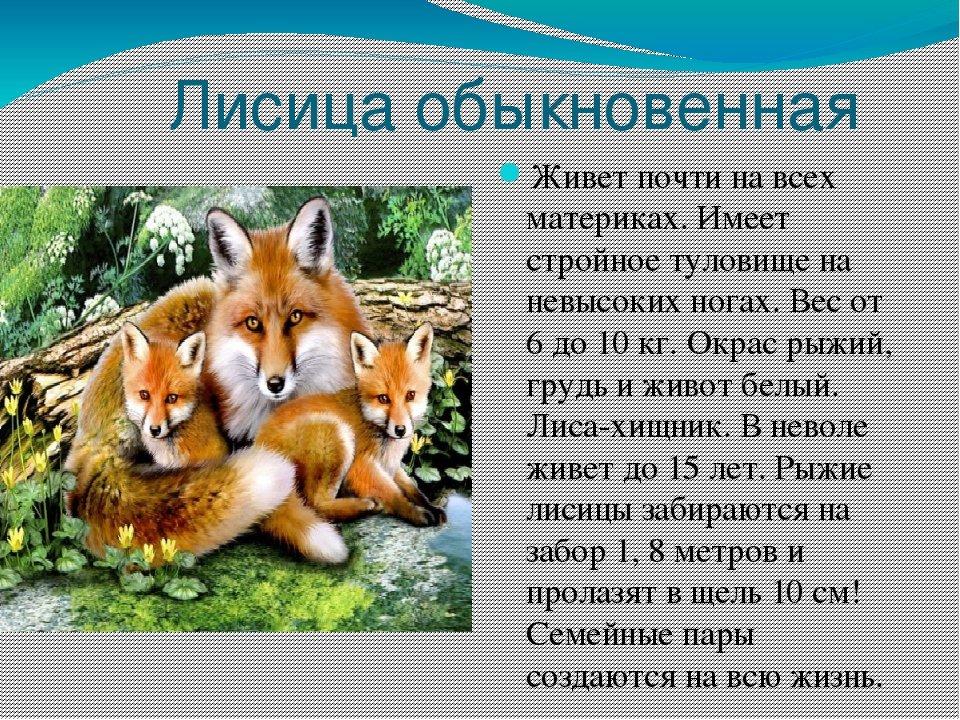 Картинки и тексты про лису