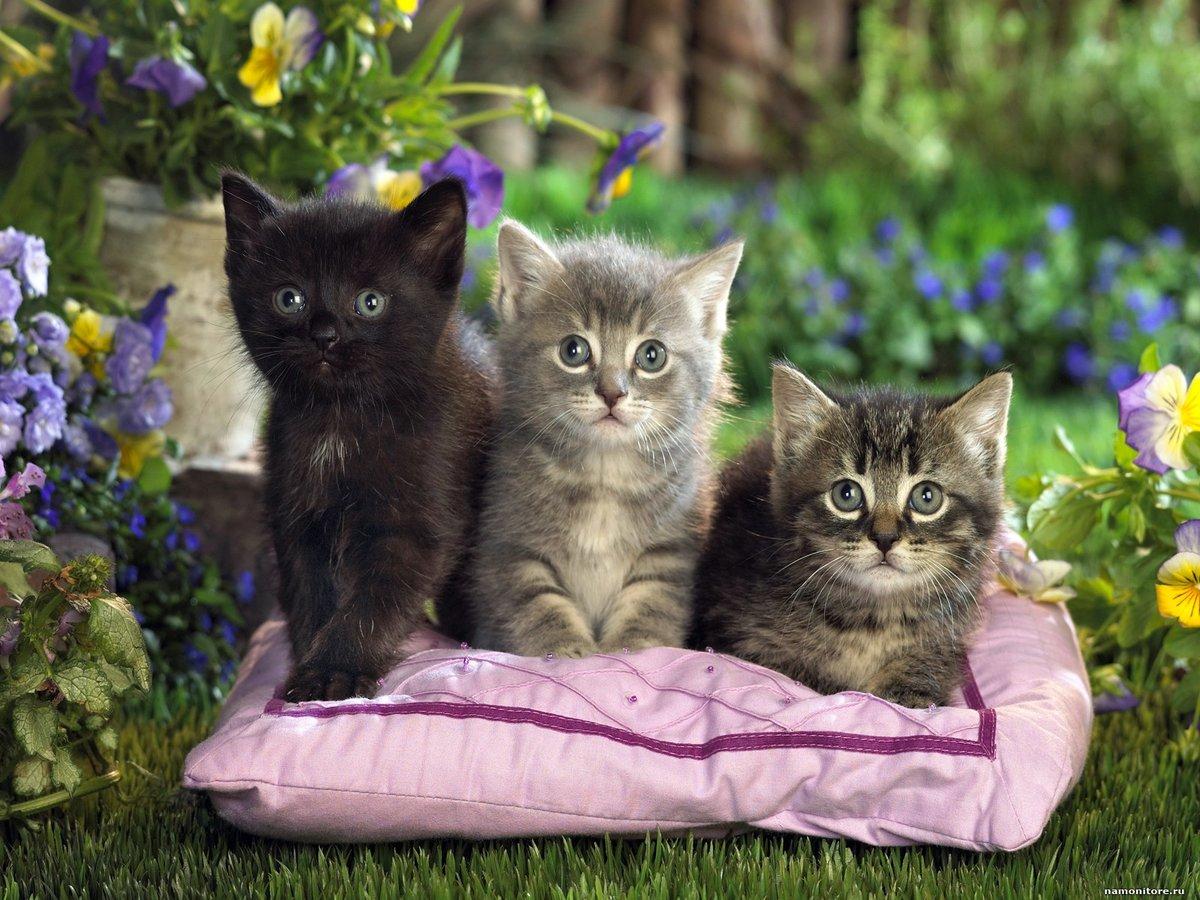 Картинка кошечка с котенком