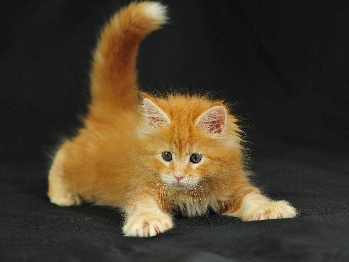 Прикол мама, картинки с котятами рыжими