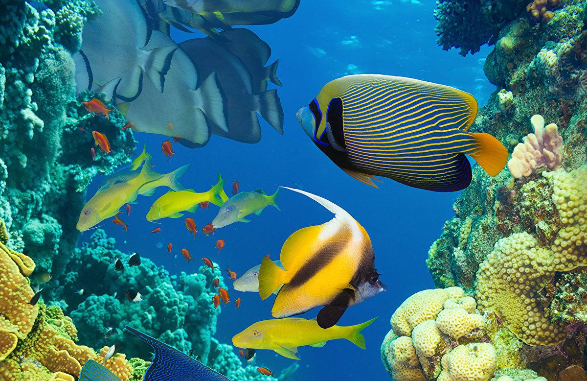 теперь знаете, фото подводного мира пейзажа гости смогут провести