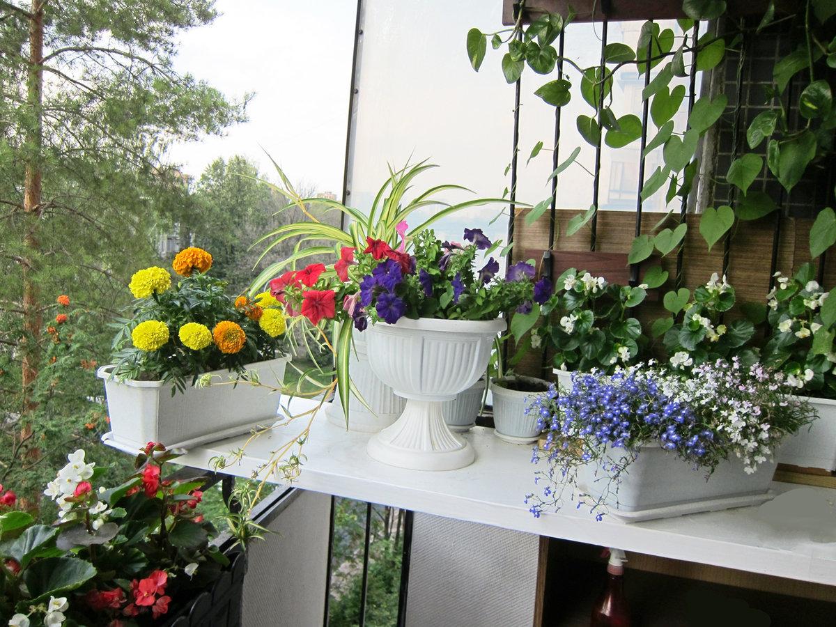 велик, красиво на балконе разместить цветы фото это один самых