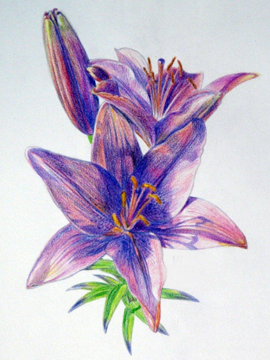Открытки нарисованная лилиями, днем рождения