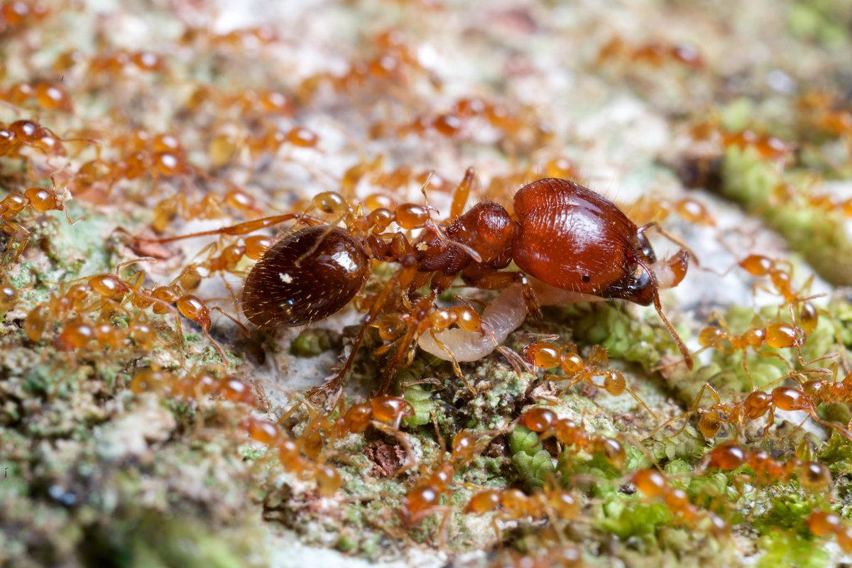 семьи муравьев картинки