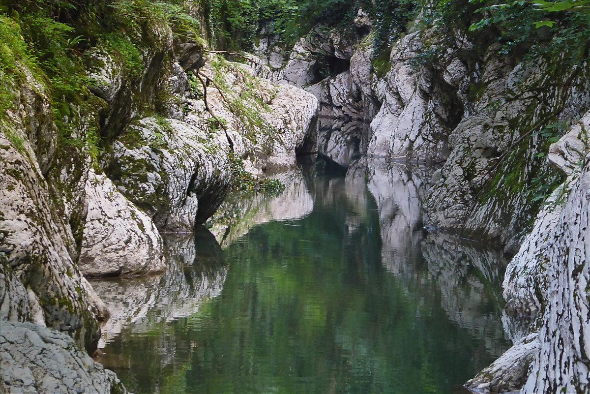 хоста каньон сочи фото отличие других злокачественных