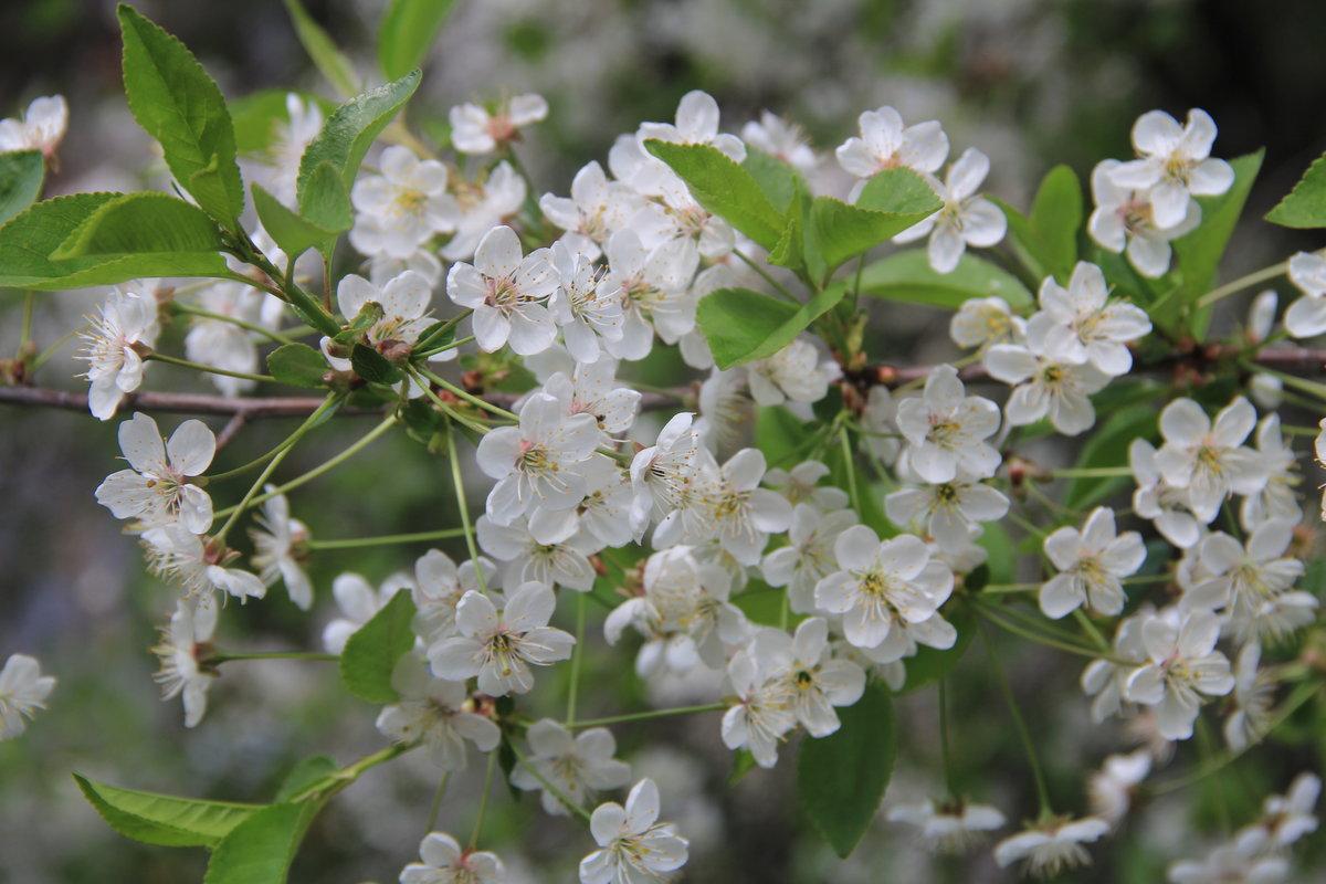 задача сделать фотографии майского цветения начала нулевых влюбили