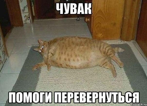 Для открытки, беременным отказывать нельзя картинка с кошкой с надписью