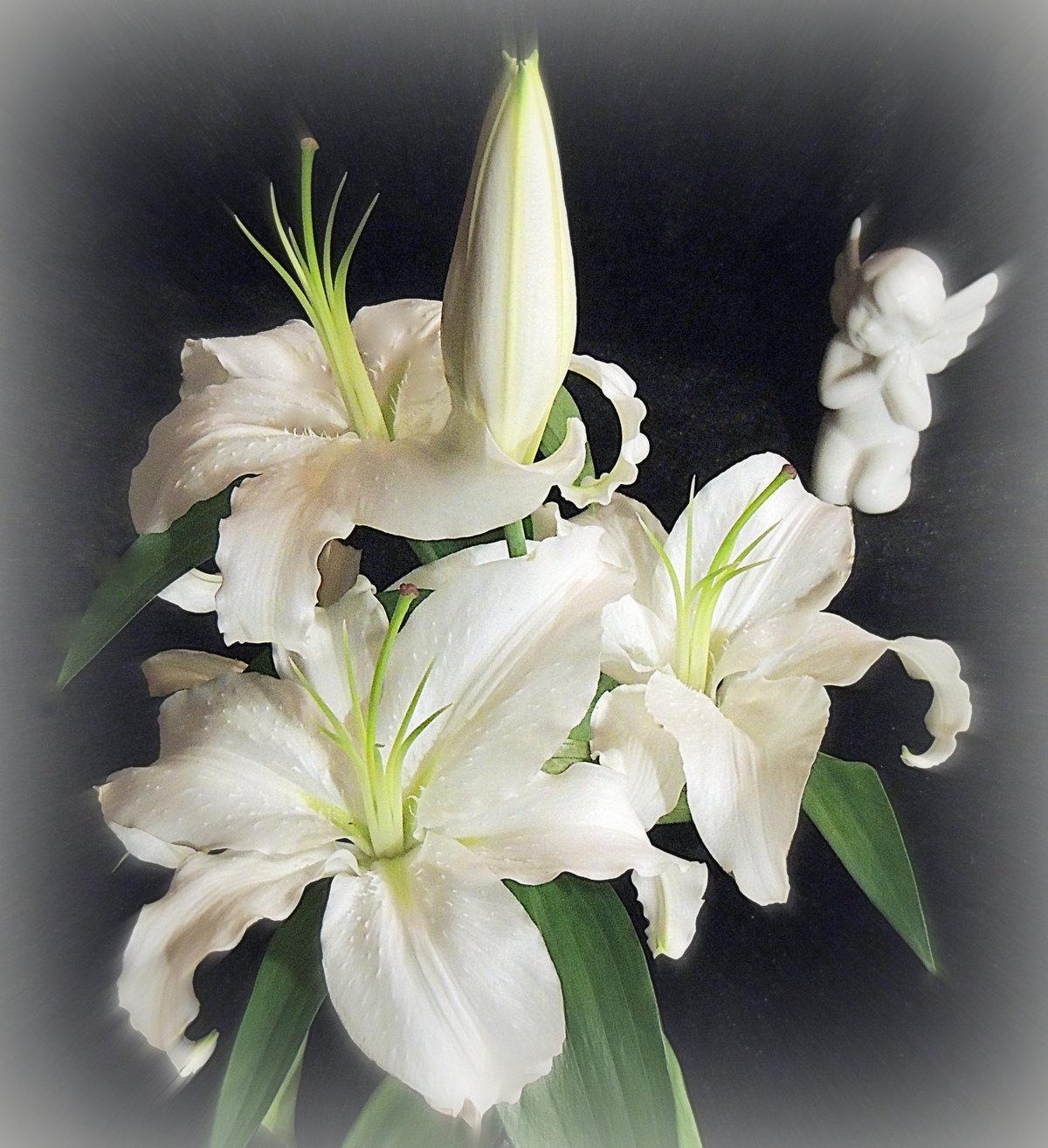 фанаты ведут картинки с цветами лилии белые вода озере