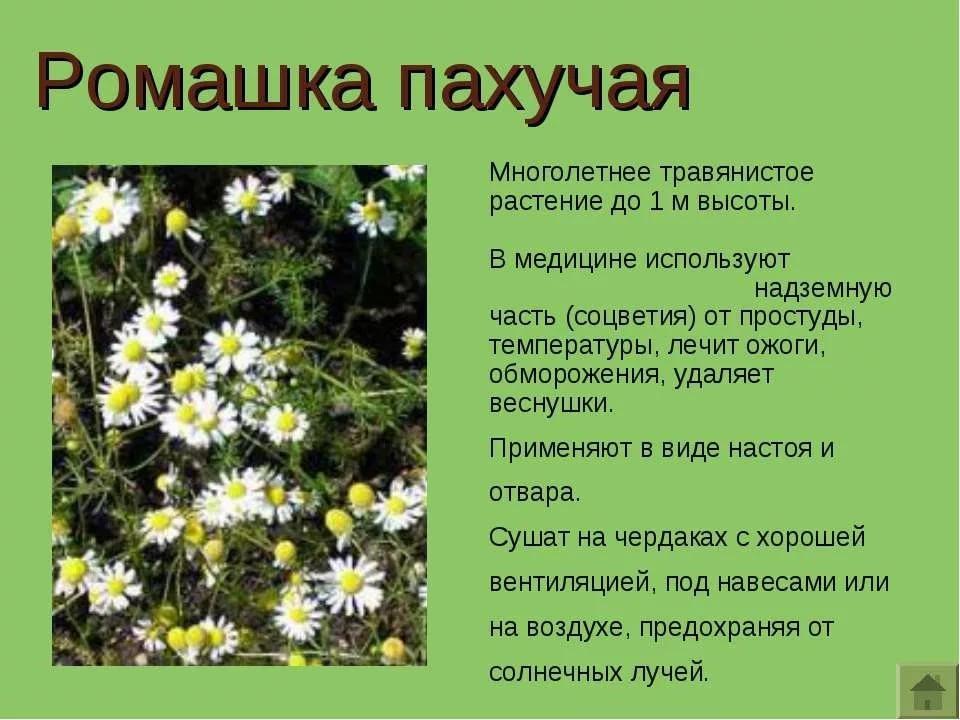картинка с рассказами лекарственные растений этого, давно известны