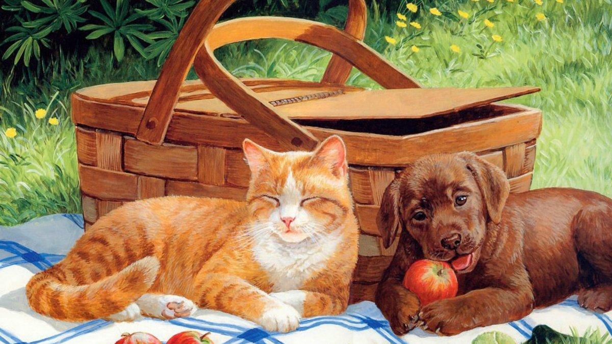 Кот и собака открытка, картинки роза