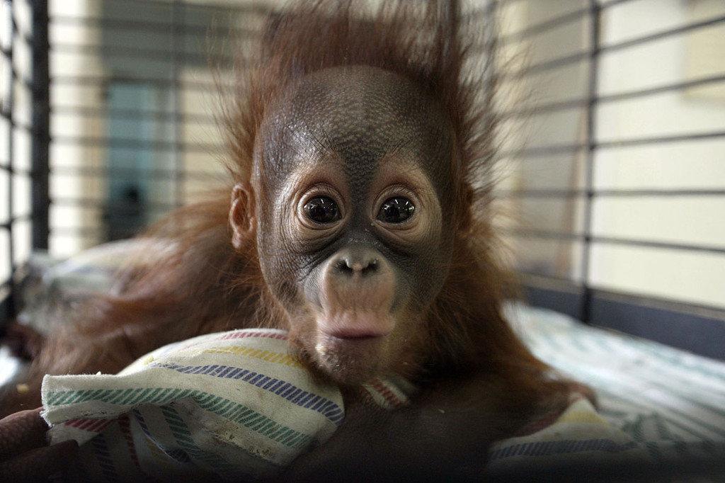Картинки смешные обезьян