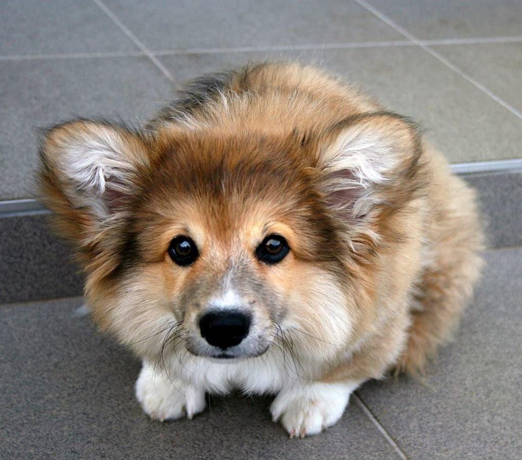 Прикольные картинки собак всех пород