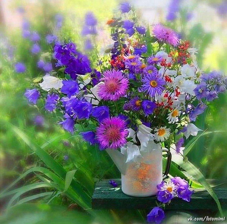 Для лучшей, картинки с полевыми цветами доброе утро