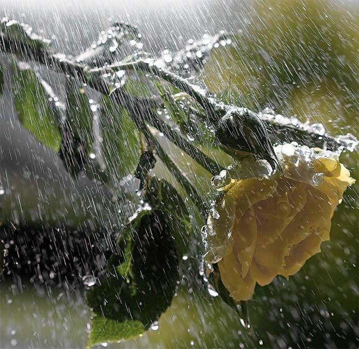 Картинка живой дождь