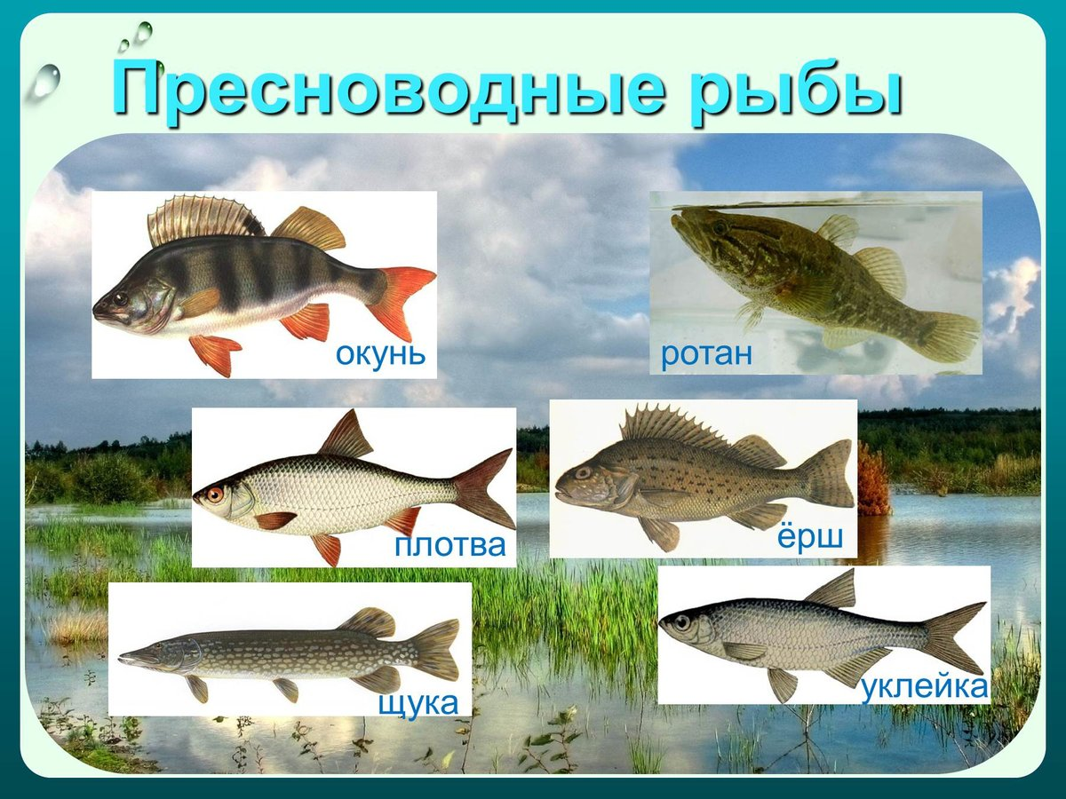 Картинки виды рыб