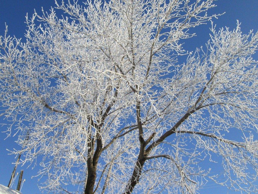 них главными иней на деревьях фото сделала пластическую