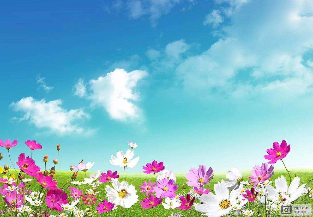 Картинки фоны цветы, картинки для