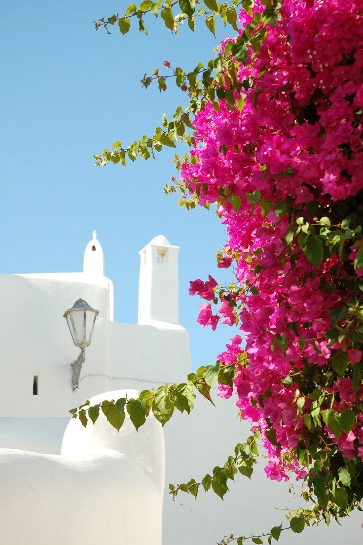 Картинки греция цветы