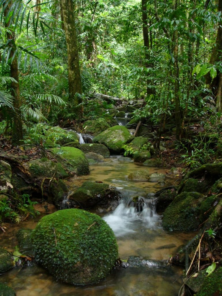 леса амазонки картинка цвет