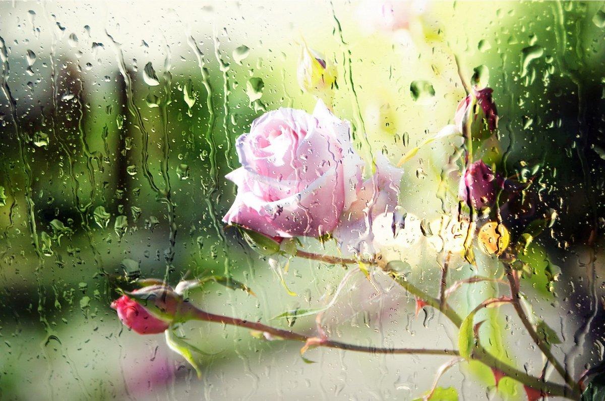 Открытки дождь и цветы