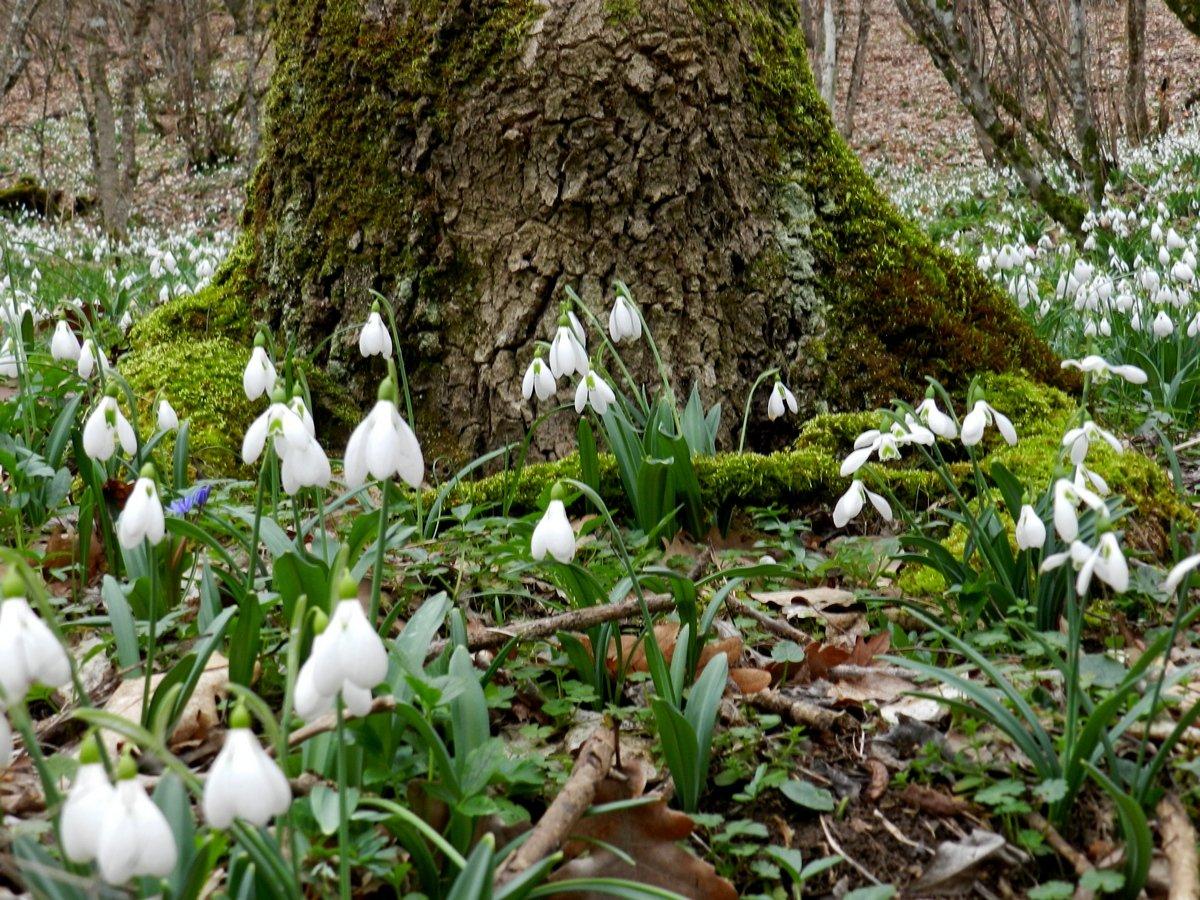 всегда картинки весенний лес подснежники вазе водой