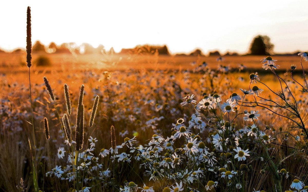 словами, картинка лето поля с цветами качественного