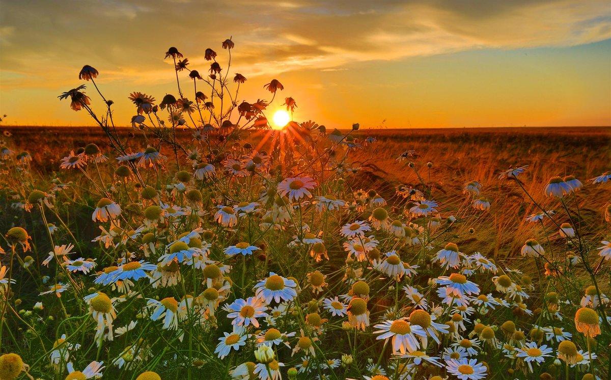 Новым годом, картинки доброе утро рассвет лето цветы
