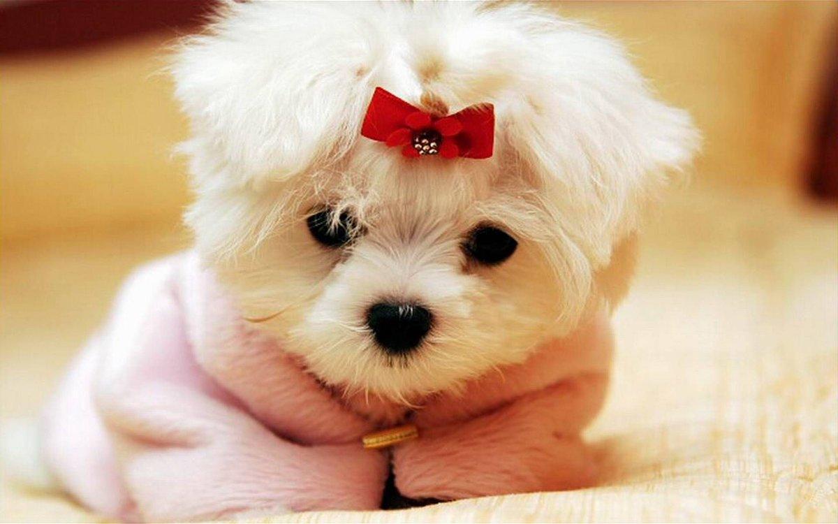 Христианские, собачки фото красивые маленький