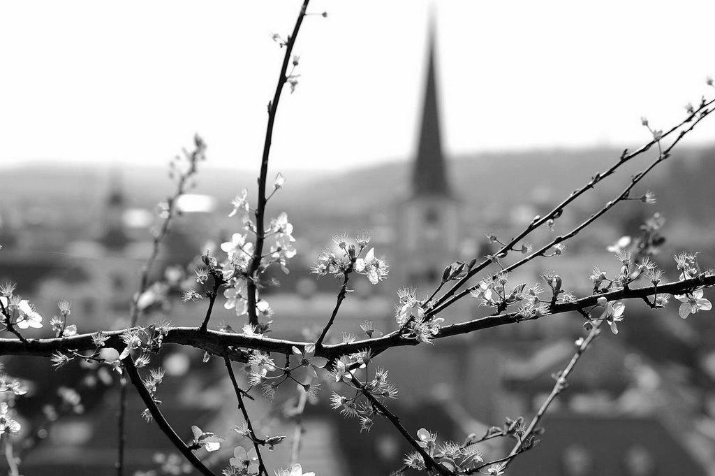 Весна открытки черно белые, сделать