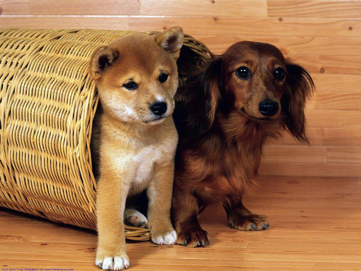 смотреть картинки все собаки вид после удаления